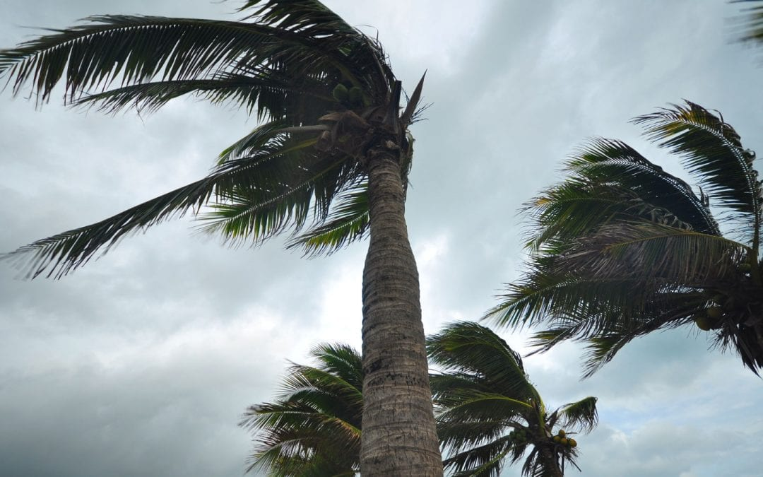 The Hurricane Proof House: Does It Exist? What You Need to Know about Roofing Materials That Can Stand up to Mother Nature